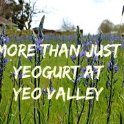 More than just Yeogurt at Yeo Valley // part two