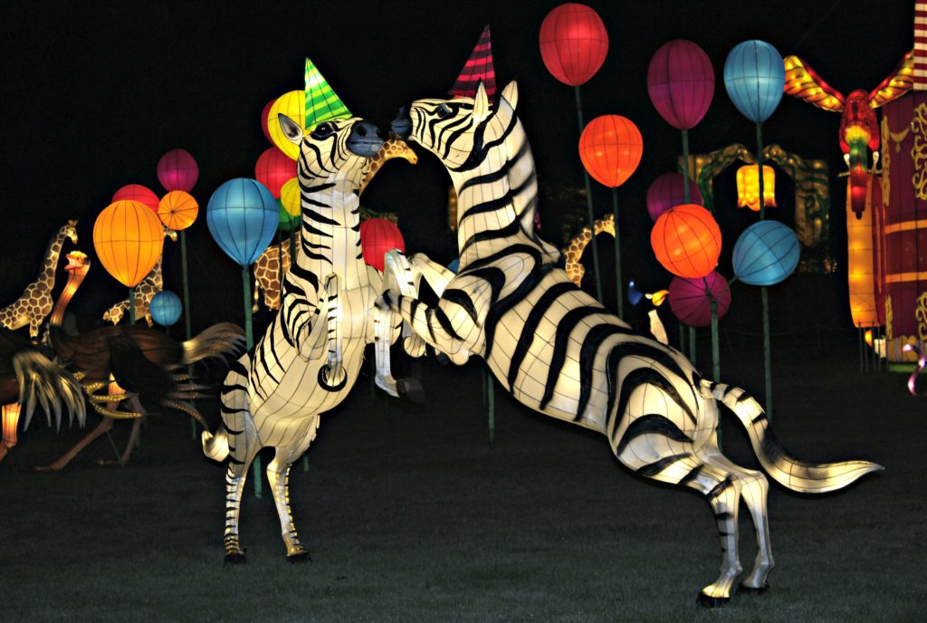 zebras-lit-up