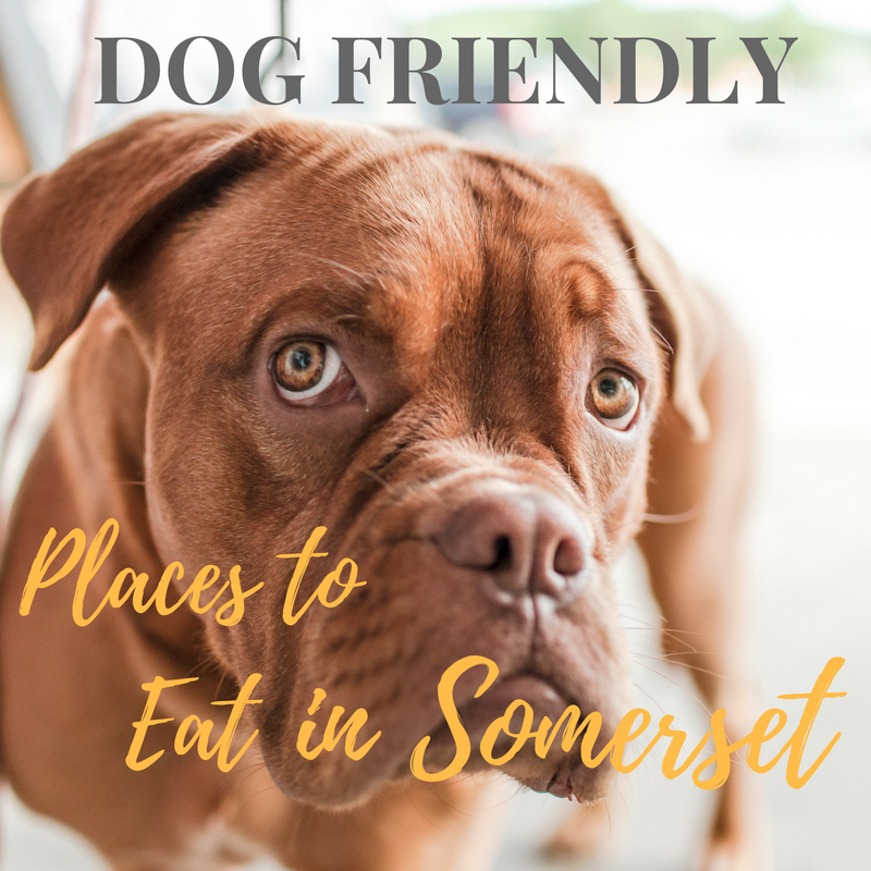 Dog friendly places to eat in Somerset
